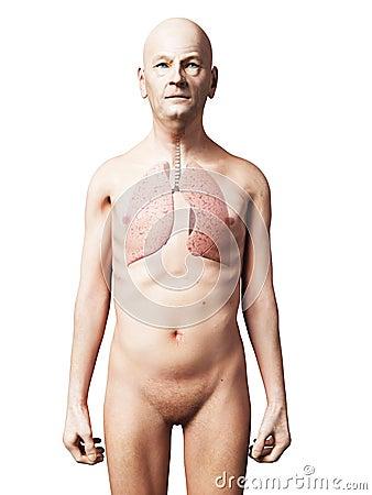 Męski płuco