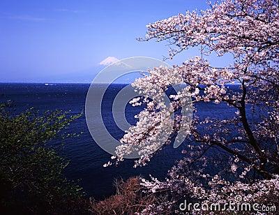 Mt fuji-383
