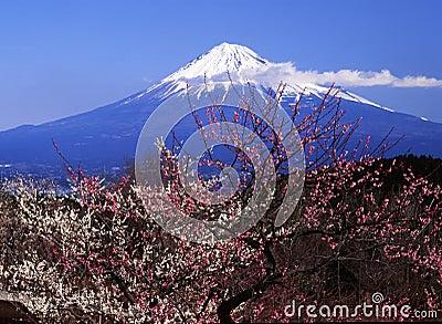 Mt fuji-415