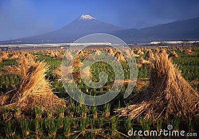 Mt fuji-424