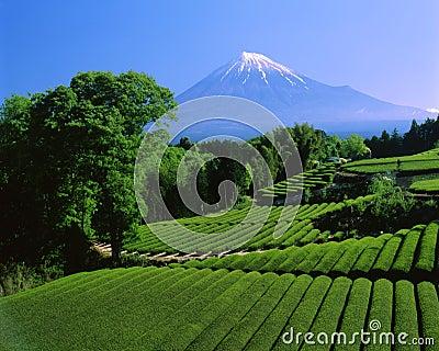 Mt fuji-443