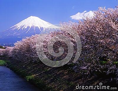 Mt fuji-454