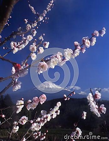 Mt fuji-455