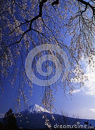 Mt fuji-477
