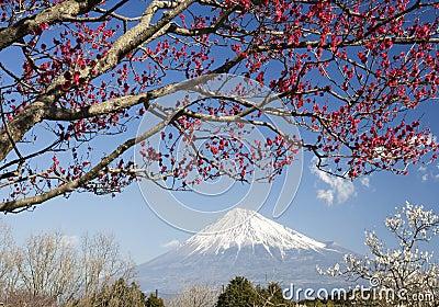 Mt fuji-dg 35