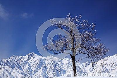 Mt. Goryudake, Nagano Japan
