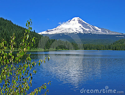 Mt. Hood with Trillium Lake
