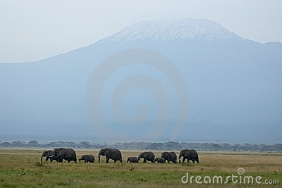 Mt. Kilimanjaro and elephants
