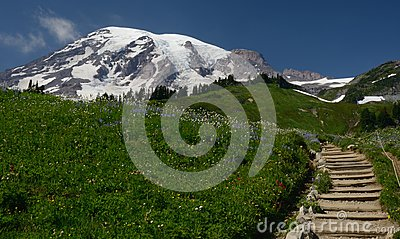 Mt Rainer in spring