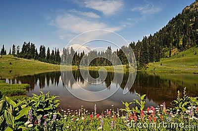Mt. Rainier and Tipsoo Lake