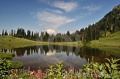 Mt. Rainier and Tipsoo Lake with wildflower