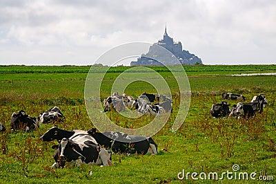 Mt. Saint Michel with cows
