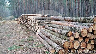 Mucchi di legno