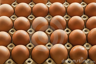 Much Eggs in egg carton packaging