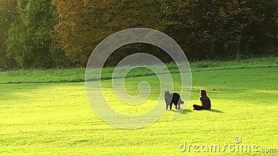 Muchacha y un perro en el parque almacen de video