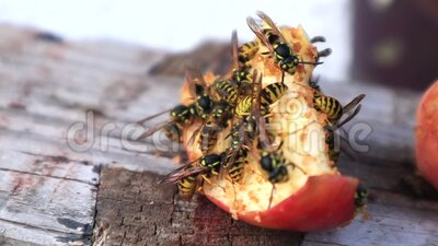 Muchas avispas sobre una manzana dulce almacen de metraje de vídeo