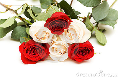 Muchas rosas aisladas en el fondo blanco