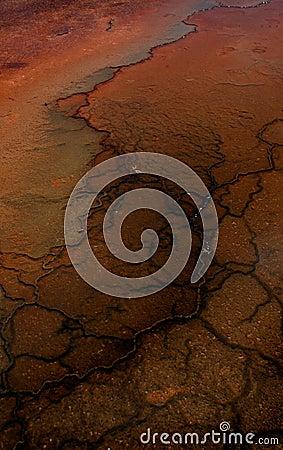 Mud Flat Patterns