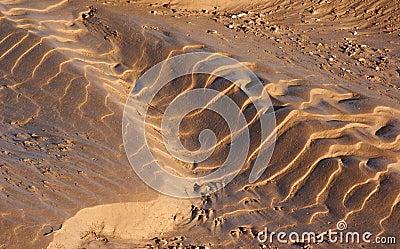 Mud Ripples