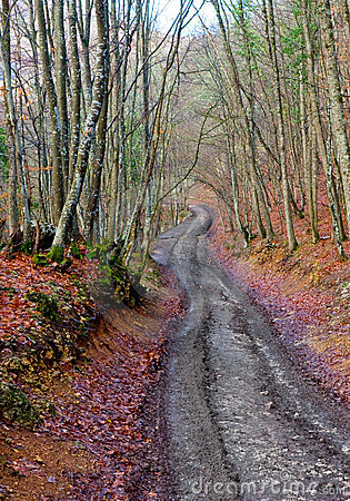 Mud road in autumn forest