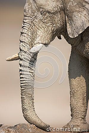 Muddy Elephant portrait
