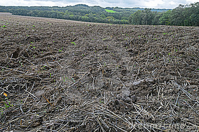 Muddy field of stubble after the harvest