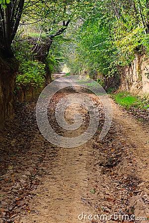 Muddy forest road in autumn in ravine
