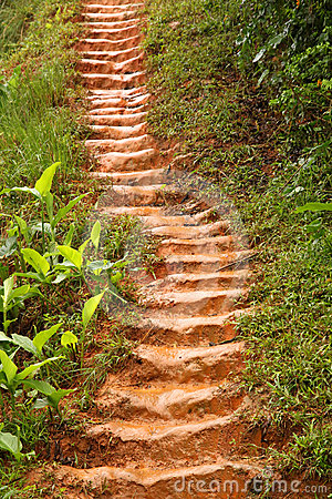 Muddy jungle stairs