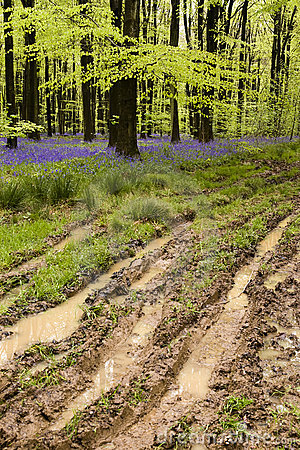 Muddy spring path