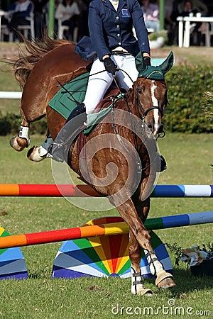 Muestre el caballo y al jinete de salto