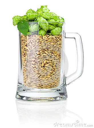Mug for beer full of barley and hops  on white
