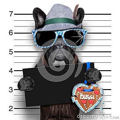 Free Mugshot Dog Royalty Free Stock Images - 42688679