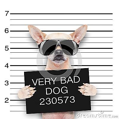 Free Mugshot Dog Royalty Free Stock Image - 45229996