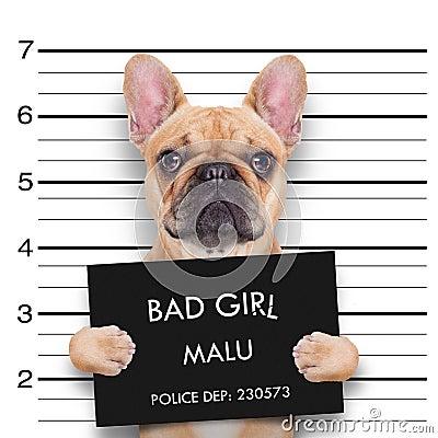 Free Mugshot Dog Royalty Free Stock Image - 46046846