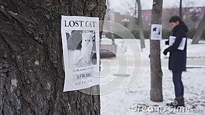 Mujer caucásica borrosa colgando anuncios de gatos perdidos en los árboles, hay un anuncio en primer plano Muchacha buscando almacen de metraje de vídeo