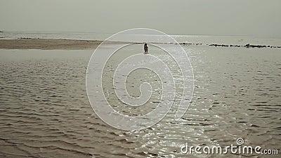Mujer joven feliz que camina con su perro mixbreed en la playa, c?mara lenta almacen de video