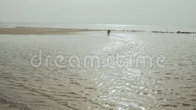 Mujer joven feliz que camina con su perro mixbreed en la playa, visi?n trasera metrajes