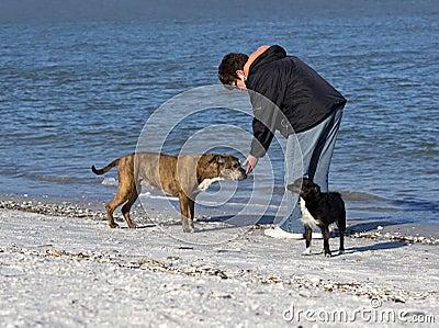 Mujer que juega con los perros en la playa