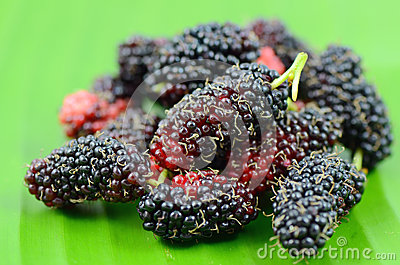 Mulberry fruits.