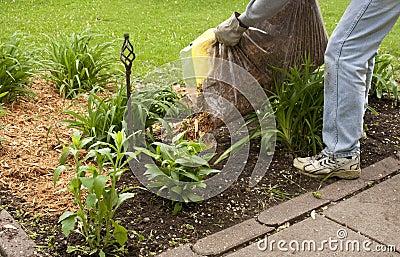 Mulching a flower garden