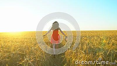 Mulher bonita latino-americano nova do viajante feliz que corre no campo de trigo no verão do por do sol Turismo da felicidade da video estoque