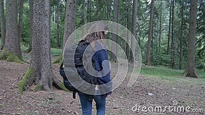 Mulher feliz da ecologista que trekking na natureza e em árvores de exploração da floresta da montanha - vídeos de arquivo
