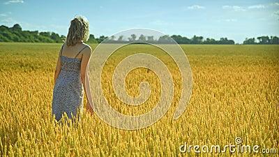 Mulher que analisa a haste do trigo Agrônomo da mulher no campo de trigo Aprecie a natureza filme
