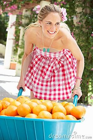 Mulher que empurra o Wheelbarrow enchido com as laranjas