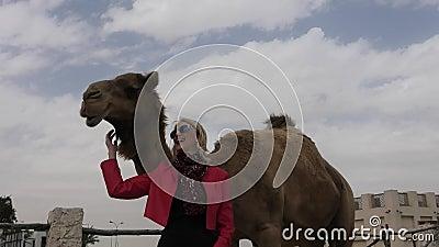 A mulher toca no camelo vídeos de arquivo