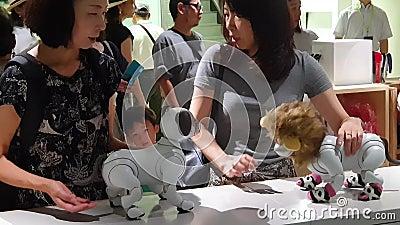Mulheres desconhecidas que interagem com os robôs do cão de Sony Aibo em uma sala de exposições de Sony no Tóquio filme