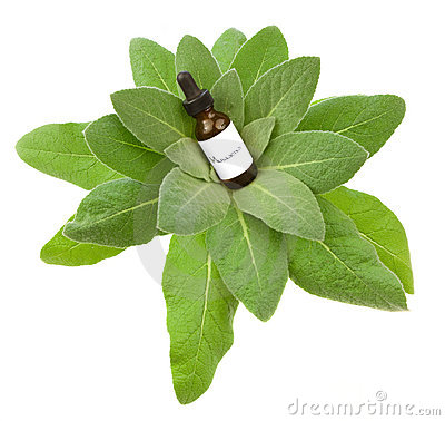 Mullein herbal tincture or oil