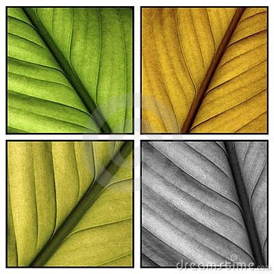 Multi color leafs