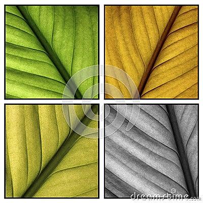 Multi color leafs