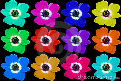 Multi-colored Flower Collage